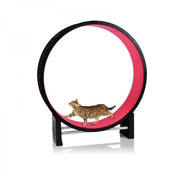 Laufrad für Katzen - Cat in Motion