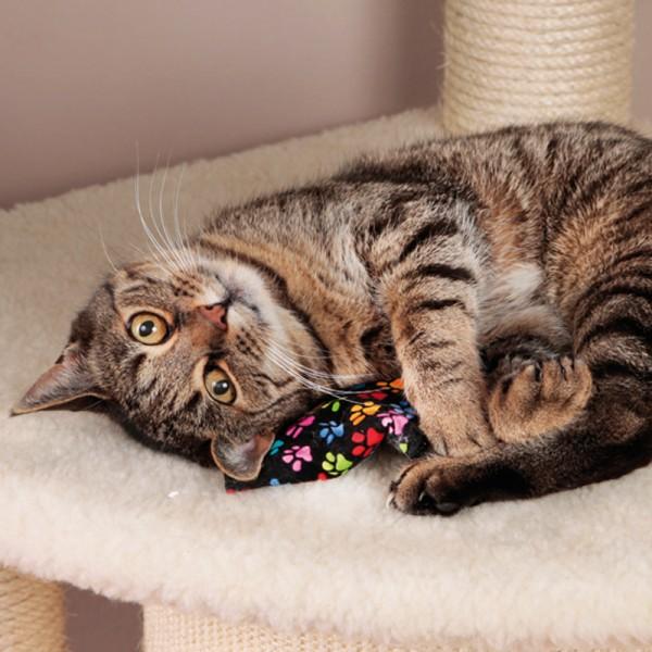 Cat-Nip Beutel Pfote